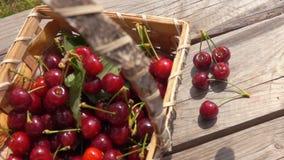 Las cerezas dulces maduras de las bayas caen en una tabla de madera almacen de metraje de vídeo