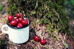 Las cerezas en el fondo del musgo verde en el bosque en un blanco esmaltaron la taza del hierro con las gotitas de agua Fotos de archivo