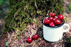 Las cerezas en el fondo del musgo verde en el bosque en un blanco esmaltaron la taza del hierro con las gotitas de agua Imagen de archivo