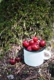 Las cerezas en el fondo del musgo verde en el bosque en un blanco esmaltaron la taza del hierro con las gotitas de agua Fotografía de archivo
