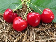 Las cerezas rojas tienen hojas verdes en fondo marrón del heno de la paja Fotografía de archivo libre de regalías