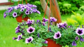 Las cestas de la ejecución con una petunia florecen imágenes de archivo libres de regalías