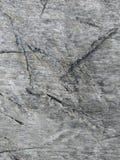 Las cicatrices del árbol fotos de archivo