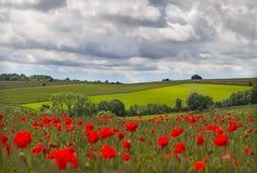 Las colinas adentro con el campo de amapolas acercan a Leafield, chozas Foto de archivo libre de regalías