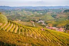 Las colinas de los viñedos de Langhe Barolo ajardinan, Piamonte, Italia Fotos de archivo libres de regalías