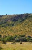 Las colinas del parque de la fauna foto de archivo
