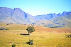 Las colinas son vivas Imagenes de archivo