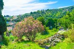 Las colinas verdes fotos de archivo