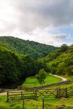 Las colinas verdes, las progresiones toxicológicas cerca del río se zambulleron en el Na máximo del distrito Imágenes de archivo libres de regalías