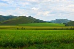 Las colinas y los campos verdes Imagen de archivo