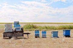 Las colmenas de la abeja están cerca del campo del girasol Fotos de archivo