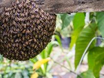 Las colmenas de la abeja están creando Fotografía de archivo libre de regalías
