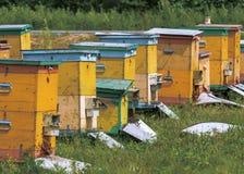 las colmenas de la abeja están en el colmenar Fotografía de archivo