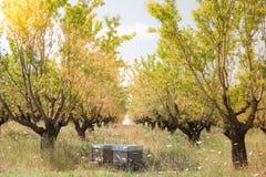 Las colmenas en el árbol frutal cultivan un huerto en Provence, Francia Fotografía de archivo libre de regalías