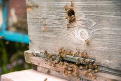Las colmenas en el colmenar con las abejas que vuelan en el aterrizaje suben Fotografía de archivo