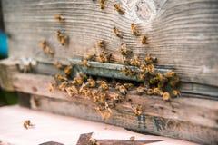 Las colmenas en el colmenar con las abejas que vuelan en el aterrizaje suben Imagenes de archivo