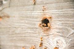 Las colmenas en el colmenar con las abejas que vuelan en el aterrizaje suben Imagen de archivo libre de regalías