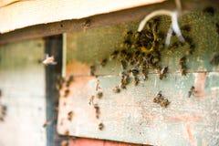 Las colmenas en el colmenar con las abejas que vuelan en el aterrizaje suben Foto de archivo libre de regalías