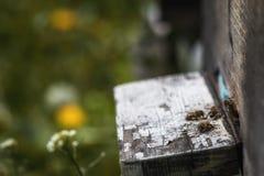 Las colmenas en la disminución con pocas abejas se fueron vivo después del colla de la colonia Imagen de archivo