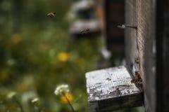 Las colmenas en la disminución con pocas abejas se fueron vivo después del colla de la colonia Fotos de archivo
