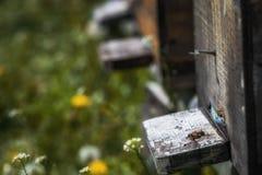 Las colmenas en la disminución con pocas abejas se fueron vivo después del colla de la colonia Fotos de archivo libres de regalías