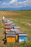 Las colmenas en la lavanda colocan en Provence, Francia Imagen de archivo