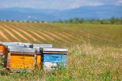 Las colmenas en la lavanda colocan en Provence, Francia Imagen de archivo libre de regalías