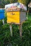 Las colmenas en un colmenar con las abejas que vuelan al aterrizaje suben Fotos de archivo