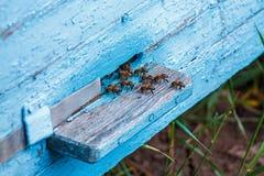 Las colmenas en un colmenar con las abejas que vuelan al aterrizaje suben Apicultura fotografía de archivo