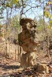 Las columnas del suelo encontradas en naturaleza fotografía de archivo