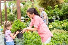 Las compras de la madre del niño del centro de jardín florecen la planta Imagen de archivo