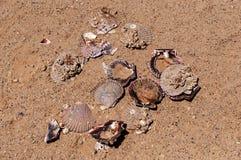 Las conchas marinas de Brocken en la arena varan en el día de verano caliente del sol Visión desde arriba Fotos de archivo libres de regalías