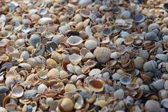 Las conchas marinas del fondo, muchas diversas conchas marinas mienten juntas en la playa en la costa fotos de archivo libres de regalías