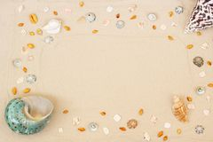 Las conchas marinas enmarcan en fondo de la arena de la playa La costa natural texturiz? la visi?n superficial, superior, espacio fotos de archivo