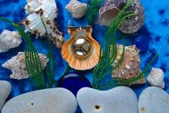 Las conchas marinas y las rocas mienten en un fondo azul imagen de archivo