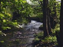 Las corrientes cruzan el bosque, un pequeño puente de piedra a través de la corriente, el sol a través del bosque a The Creek fotos de archivo