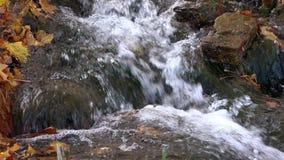Las corrientes de la ladera que se lava y que afila empiedran rielar en las caricias del sol las hojas de arce caidas metrajes