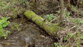 Las corrientes de una montaña fluyen, río entre los árboles musgo-cubiertos almacen de video