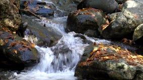 Las corrientes sobre hojean las rocas cubiertas en pequeña corriente almacen de metraje de vídeo