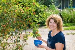 Las cosechas de la mujer de salvaje subieron en jardín Imagenes de archivo