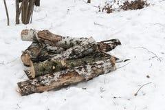 Las cuñas del abedul en la nieve en invierno nublan el parque Imagen de archivo
