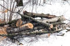 Las cuñas del abedul en la nieve en invierno nublan el parque Fotografía de archivo