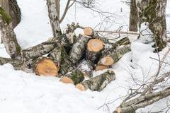 Las cuñas del abedul en la nieve en invierno nublan el parque Fotos de archivo