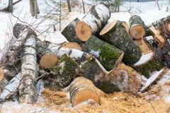 Las cuñas del abedul en la nieve en invierno nublan el parque Foto de archivo libre de regalías
