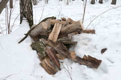 Las cuñas del abedul en la nieve en invierno nublan el parque Imagenes de archivo