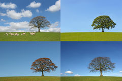 Las cuatro estaciones Imagen de archivo libre de regalías