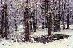 Las cubiertas de nieve descubren ramas de árbol en escena del parque del invierno Imagen de archivo libre de regalías