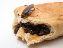 Las cucarachas llevan las enfermedades que usted tiene que eliminar Imágenes de archivo libres de regalías
