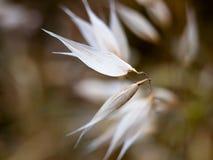 Las cuchillas de los pétalos de las cabezas de flor blanca se cierran encima de único Foto de archivo
