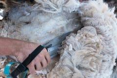 Las cuchillas pasan a través de la fibra de la alpaca, corte de la cuchilla Imagen de archivo libre de regalías